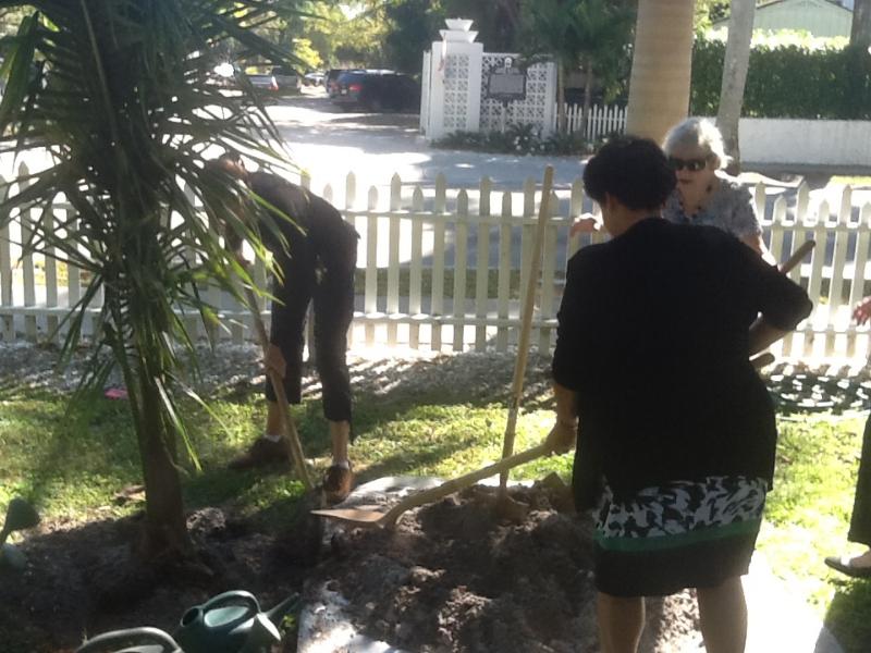 mitzipat-planting