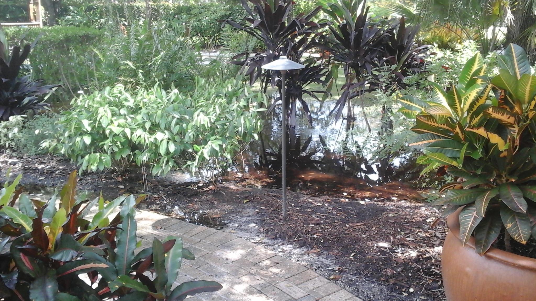Standing water in garden