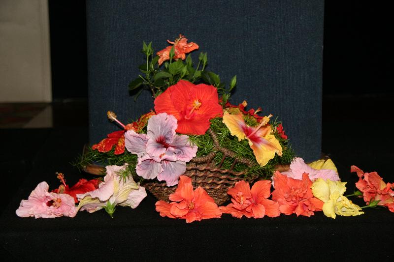 hibisuc-flowers
