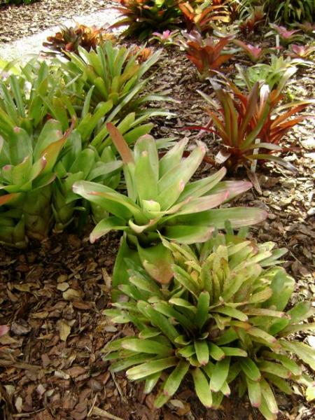 brom-garden