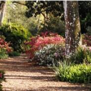 Bok Tower Gardens Tour